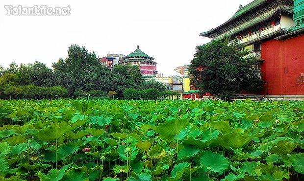 Taipei Museum Art Summer Lotus Romanticism 台北历史博物馆 夏日荷花 艺术 浪漫主义 Yalan雅岚 黑摄会